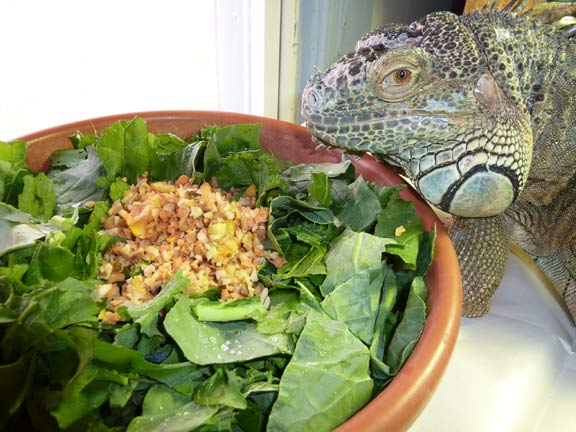 What does an Iguana eat? – Best Food to Provide to Iguana