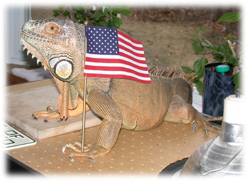 Photo of Pugsley, the official mascot of Reptilecare.com