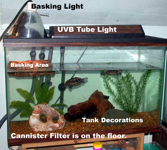 Large Aquatic Turtle Tanks for Pinterest